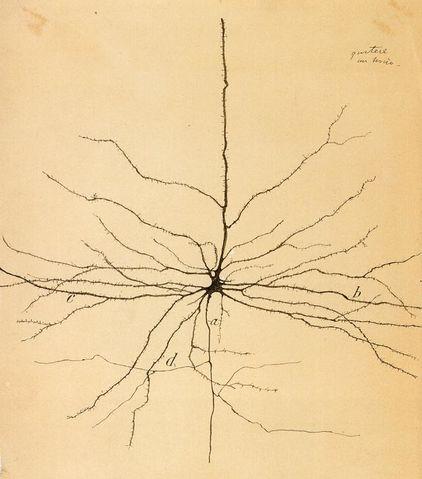 Dibujo de Ramón y Cajal