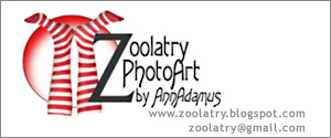 Blog Design by Zoolatry