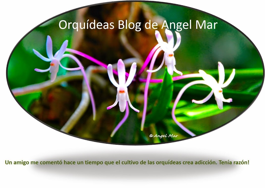Orquídeas Blog de Angel Mar