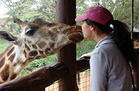A photograph of Longy Ham kissing a giraffe.