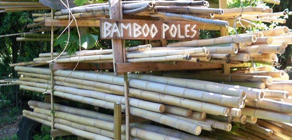 Green Bamboo Sticks