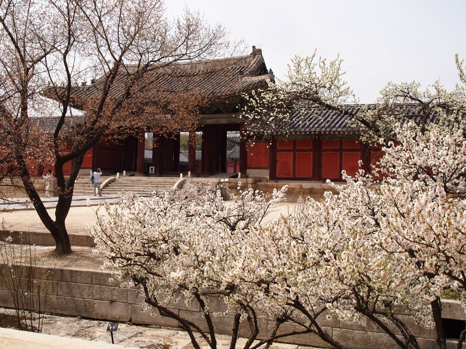 How To Enjoy Spring In South Korea Seoul Searching