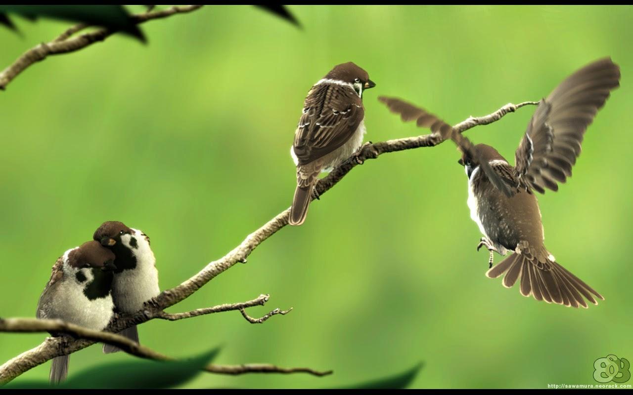 free love birds wallpapers and love birds backgrounds for your