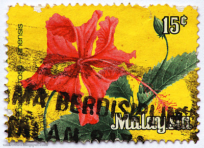 Setem Hibiscus rosa-sinensis - 15 sen