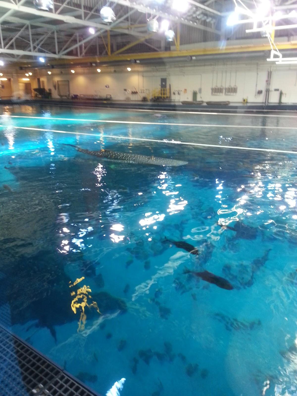 georgia aquarium internship third week goin 39 strong