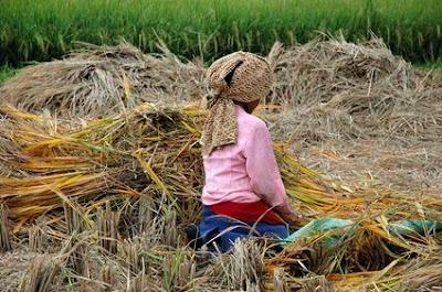economia tradicional