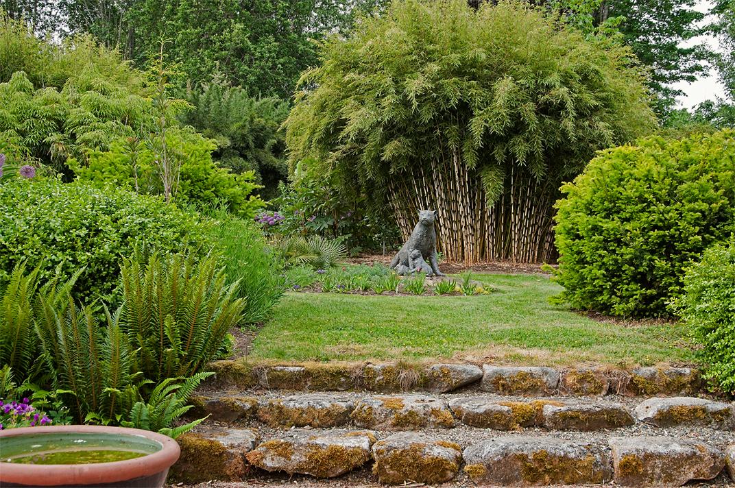 linda cochran 39 s garden fargesia robusta. Black Bedroom Furniture Sets. Home Design Ideas