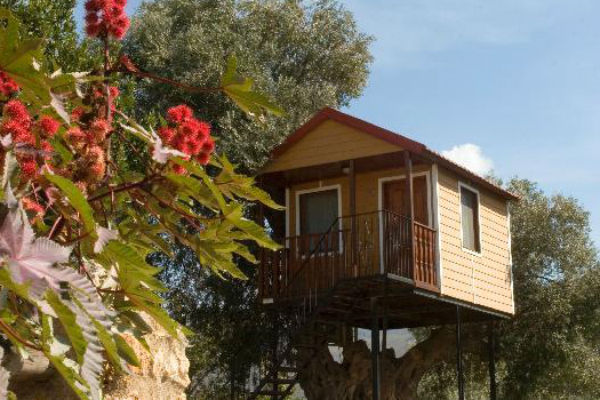Mjm viajes - Hoteles cabanas en los arboles ...