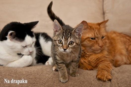 Koty społeczne i aspołeczne