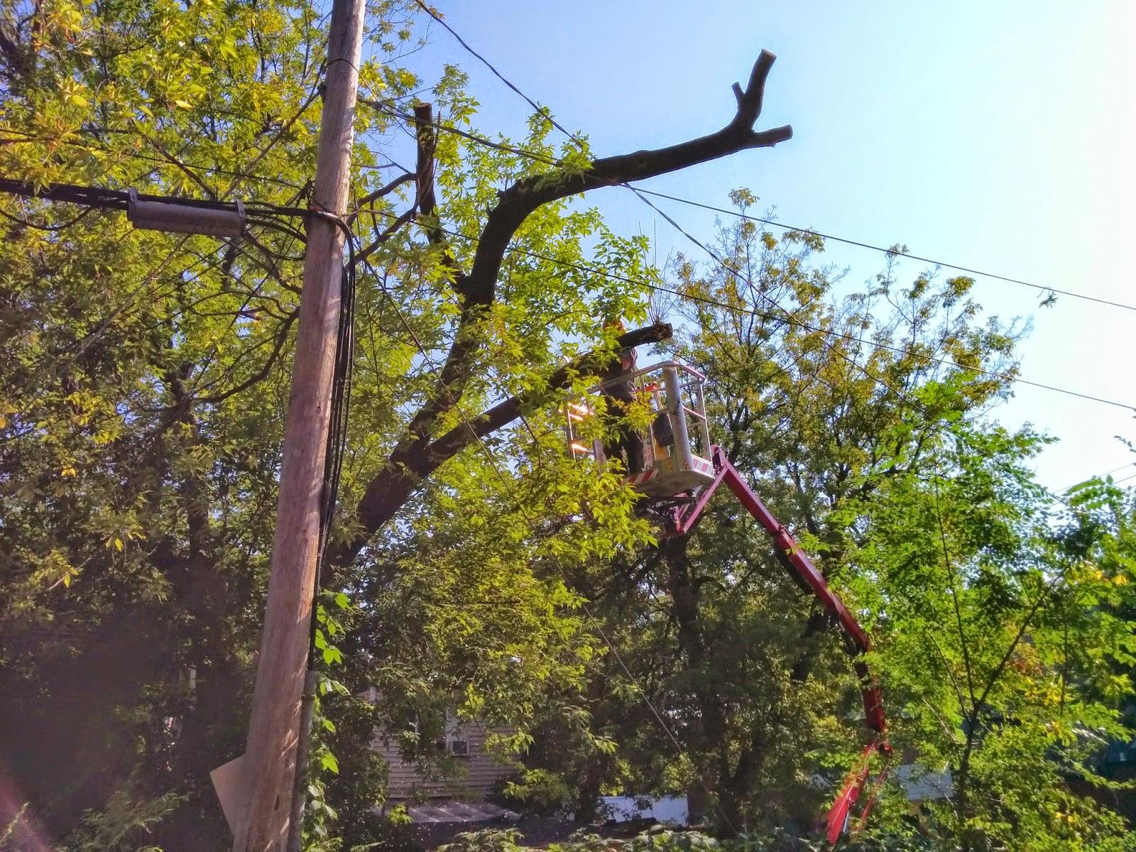 Service d 39 arbres 4 saisons mondage drummondville for Horticulteur paysagiste