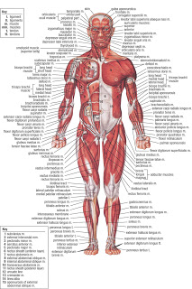 Human Anatomy Maps