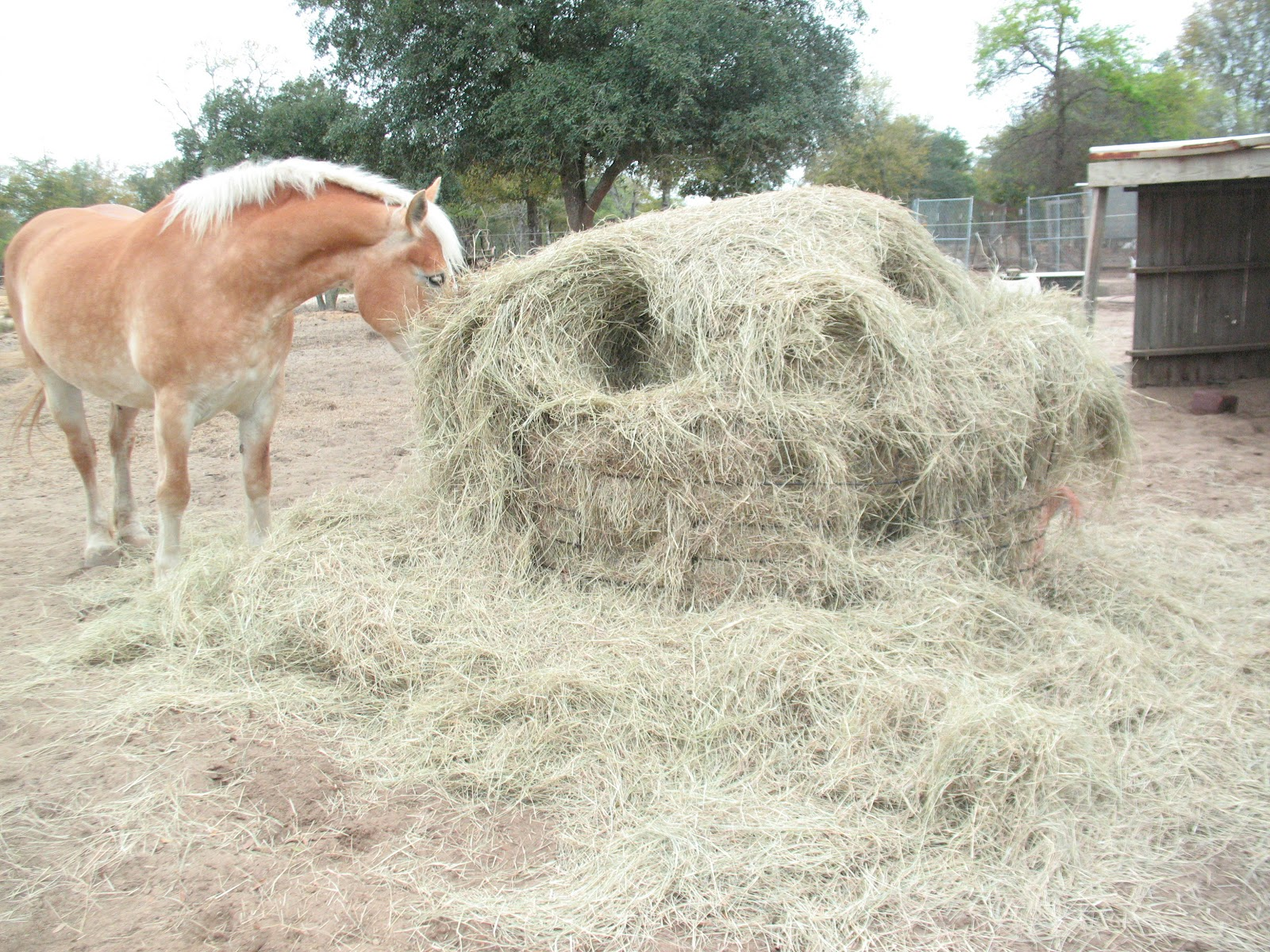 pin horse feeder horses the pallet diy hay pinterest for
