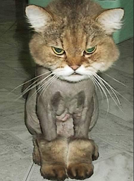 http://1.bp.blogspot.com/-skWGQGOjpj8/TpKfkaMbc1I/AAAAAAAABUk/5WfX8VY2uWs/s1600/a97931_animal-hair_4-cat.jpg