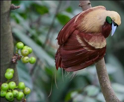40 Amazing Bird Photos