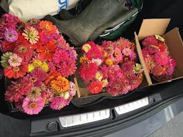 Latest Zinnia Donation of 17 bouquets