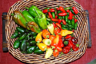 Alejandro Peppers Farm Harvest