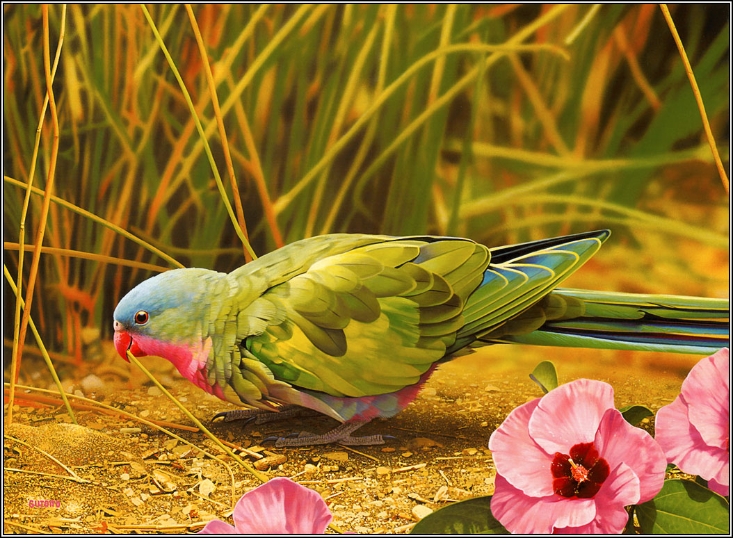 beautiful birds latest hd wallpapers 2013   top hd animals wallpapers