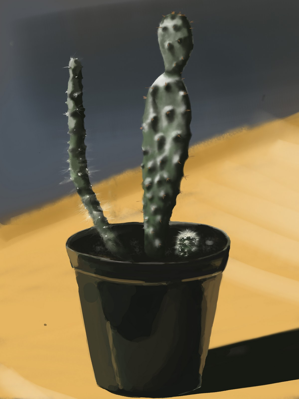 cactus plant photoshop