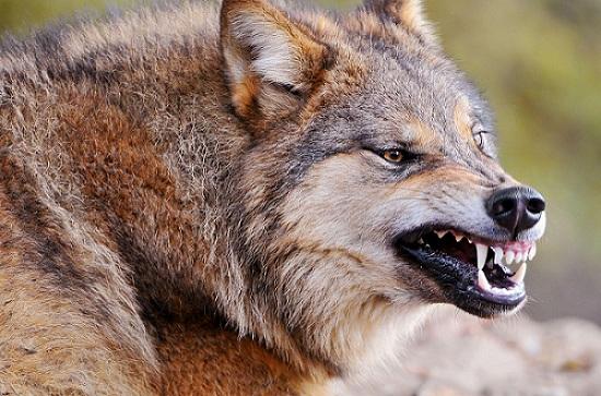 5 Hewan Ini Memiliki Gigi Yang Menyeramkan