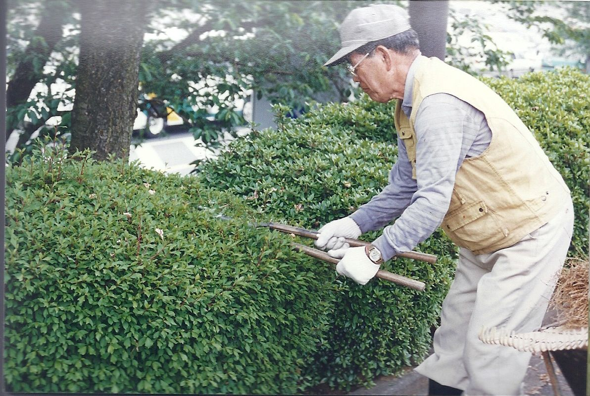 Japanese Gardener #10: Japanese Gardeners Always Use Hand Hedge Shears To Do Their Hedging Work.  Thatu0027s Rather Funny In A Country Renowned For Itu0027s Technological Edge With  ...