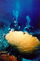 Do Diving, sailing and water sports in Brunei