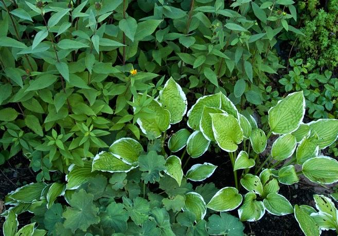 Rabatt gröna blad.