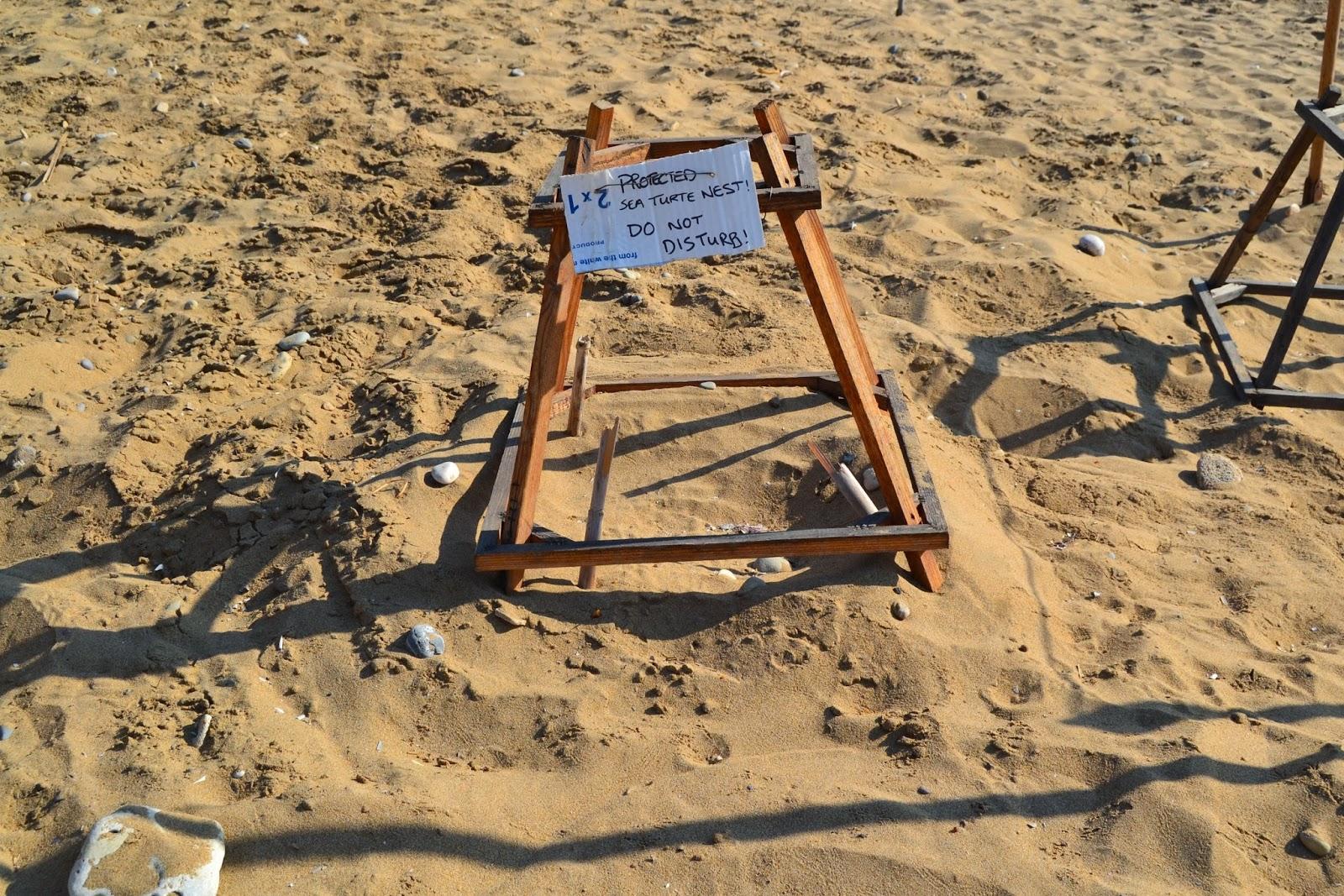 Zacinto il paradiso delle tartarughe for Deposizione uova tartarughe terrestri
