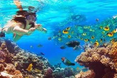 Keindahan Bawah Laut Pulau Krakatau