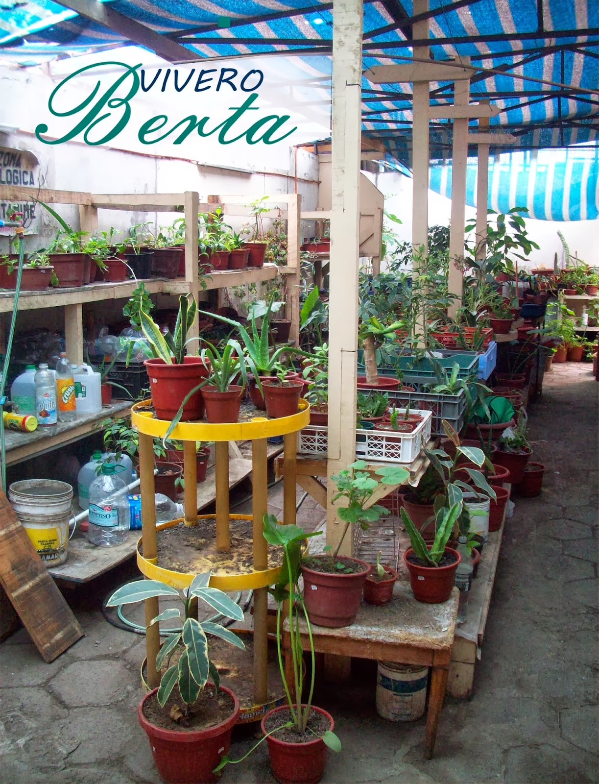 Vivero berta antofagasta for Viveros en maipu
