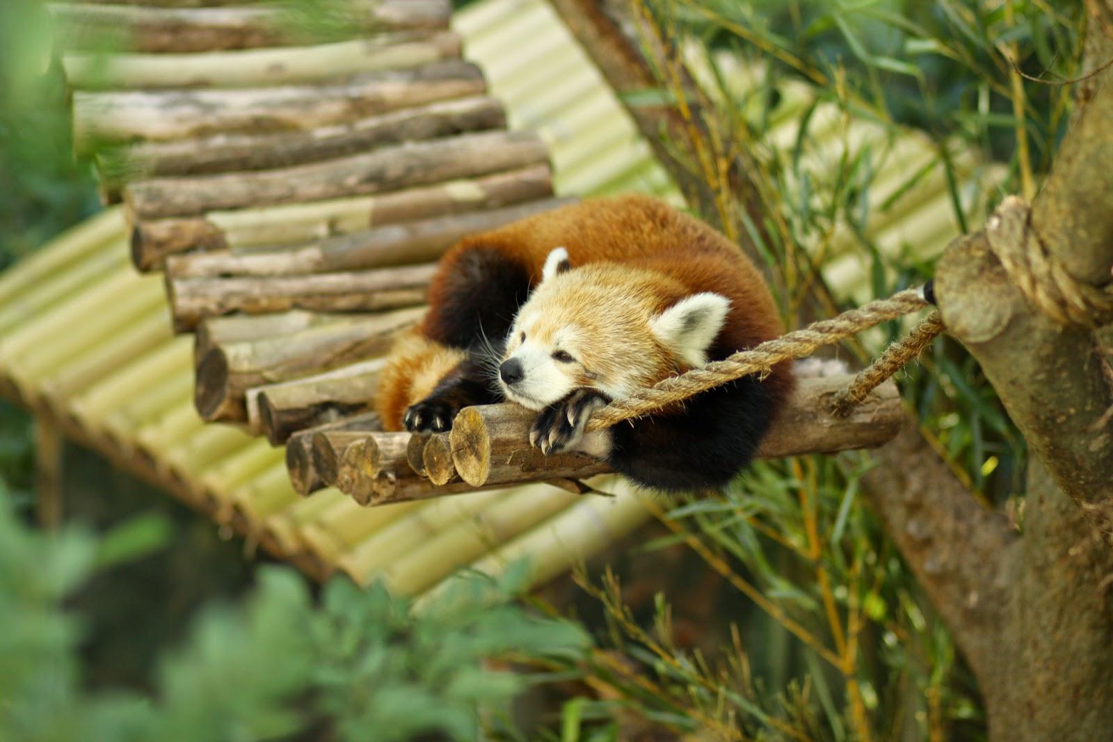 Keep it Together: Disenchanted Zoo