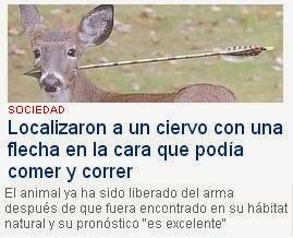 http://www.ideal.es/granada/20131114/mas-actualidad/sociedad/encuentran-ciervo-flecha-cara-puede-comer-  correr-201311141209.html