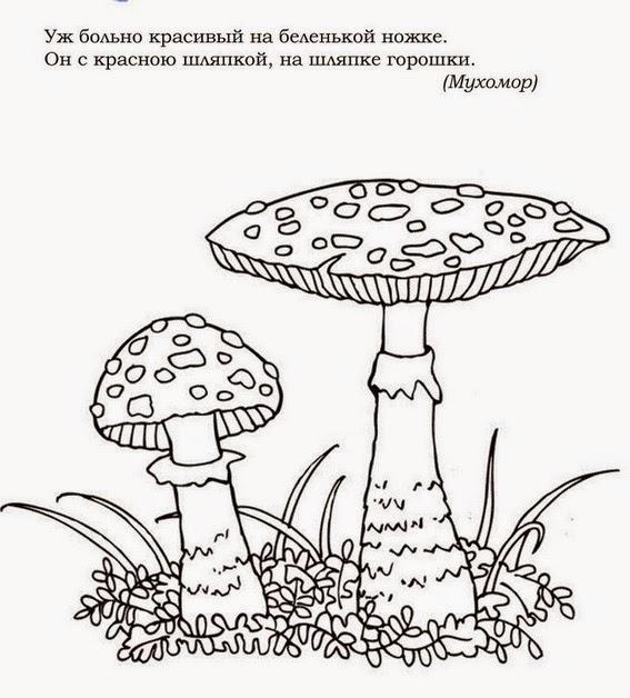 Боровик гриб раскраска