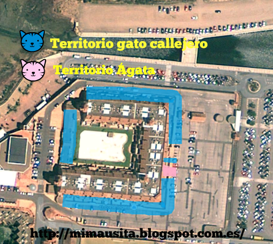 gatos-territoriales