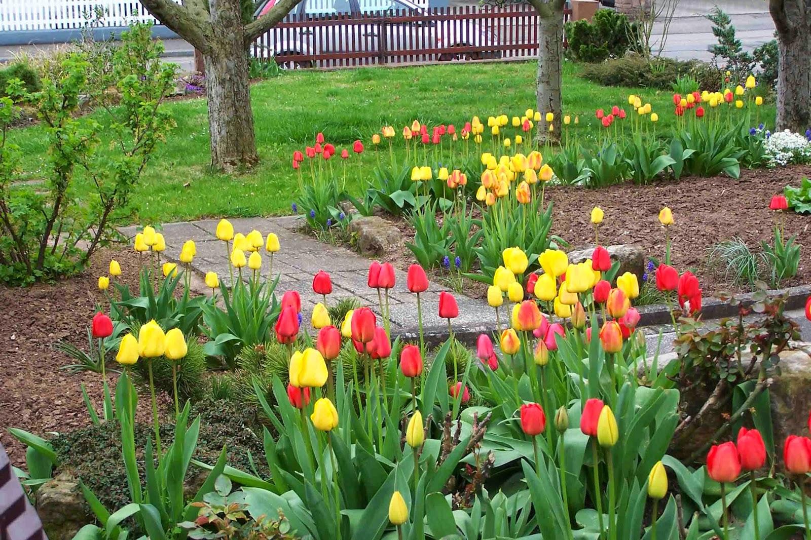 Images Of Home Flower Garden : Home flower gardens http refreshrose spot
