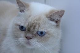 SHAKE, o primeiro de dois gatinhos
