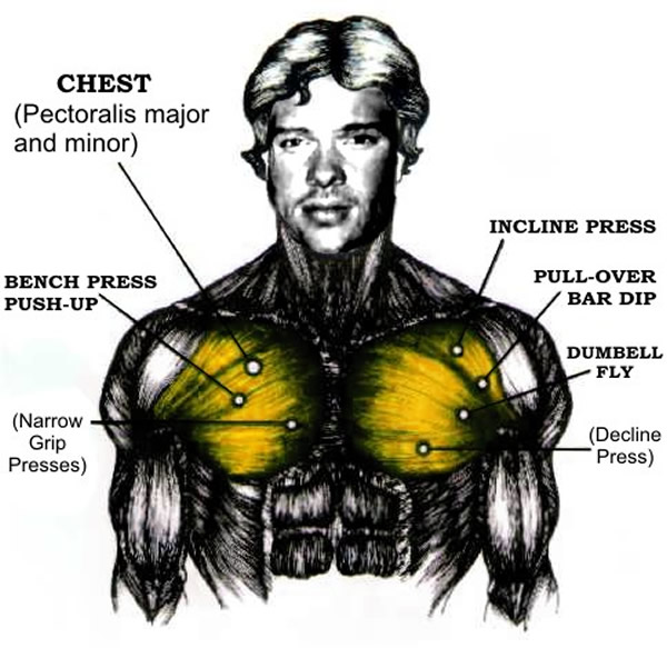 how to build chest muscles by swimming