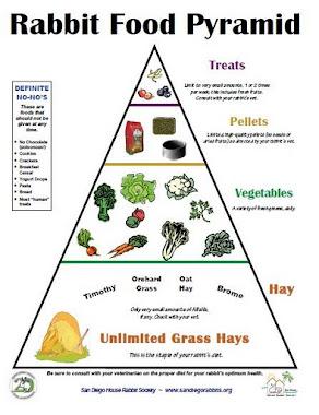 Piramid Makanan Arnab