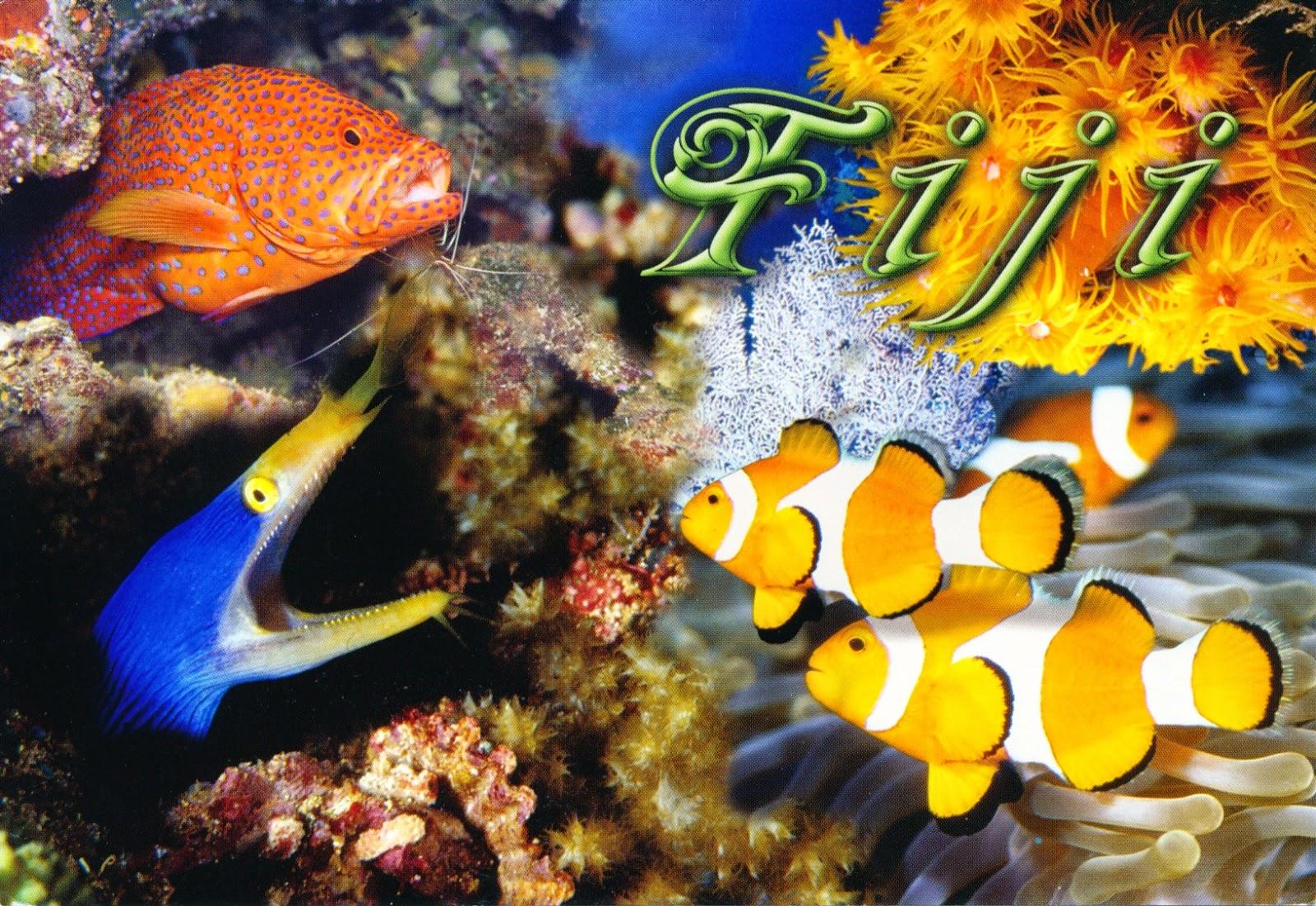 postcard, fiji, corals, fish