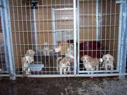 Uno de los cachorros murió de Parvo, el resto tuvieron la suerte de ser adoptados en Alemania.