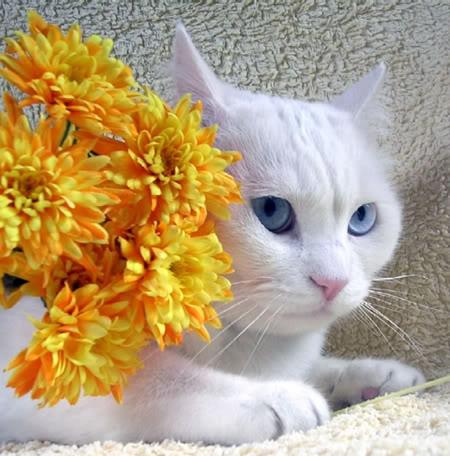 imágenes de tiernos gatitos