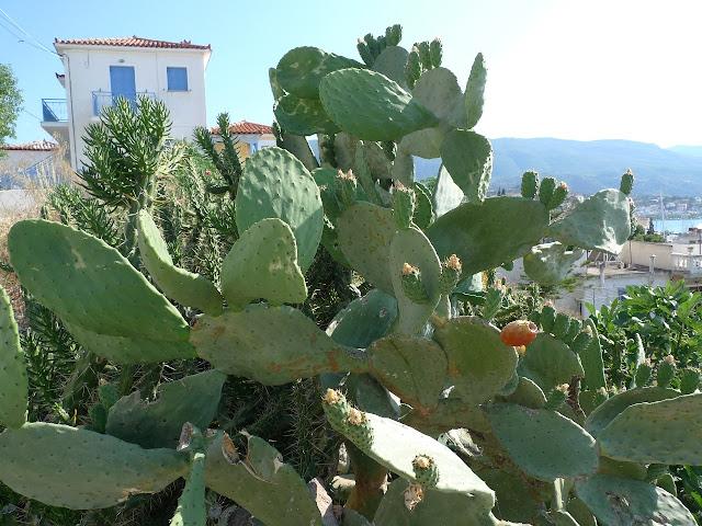 Spacer wzgórzem miasta Poros/Walking uphill Poros town