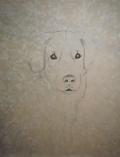 golden retriever portrait painting work in progress by Colette Theriault