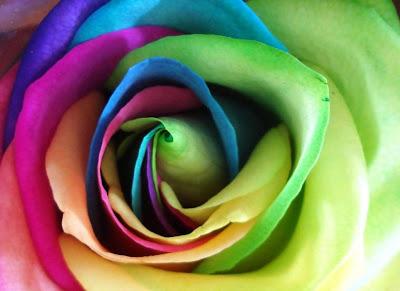 http://1.bp.blogspot.com/-sn_nIVj5JMM/TxLXxpVrkFI/AAAAAAAAAiQ/L50xPe_z6BU/s400/rainbow-rose-petals-lovely.jpg