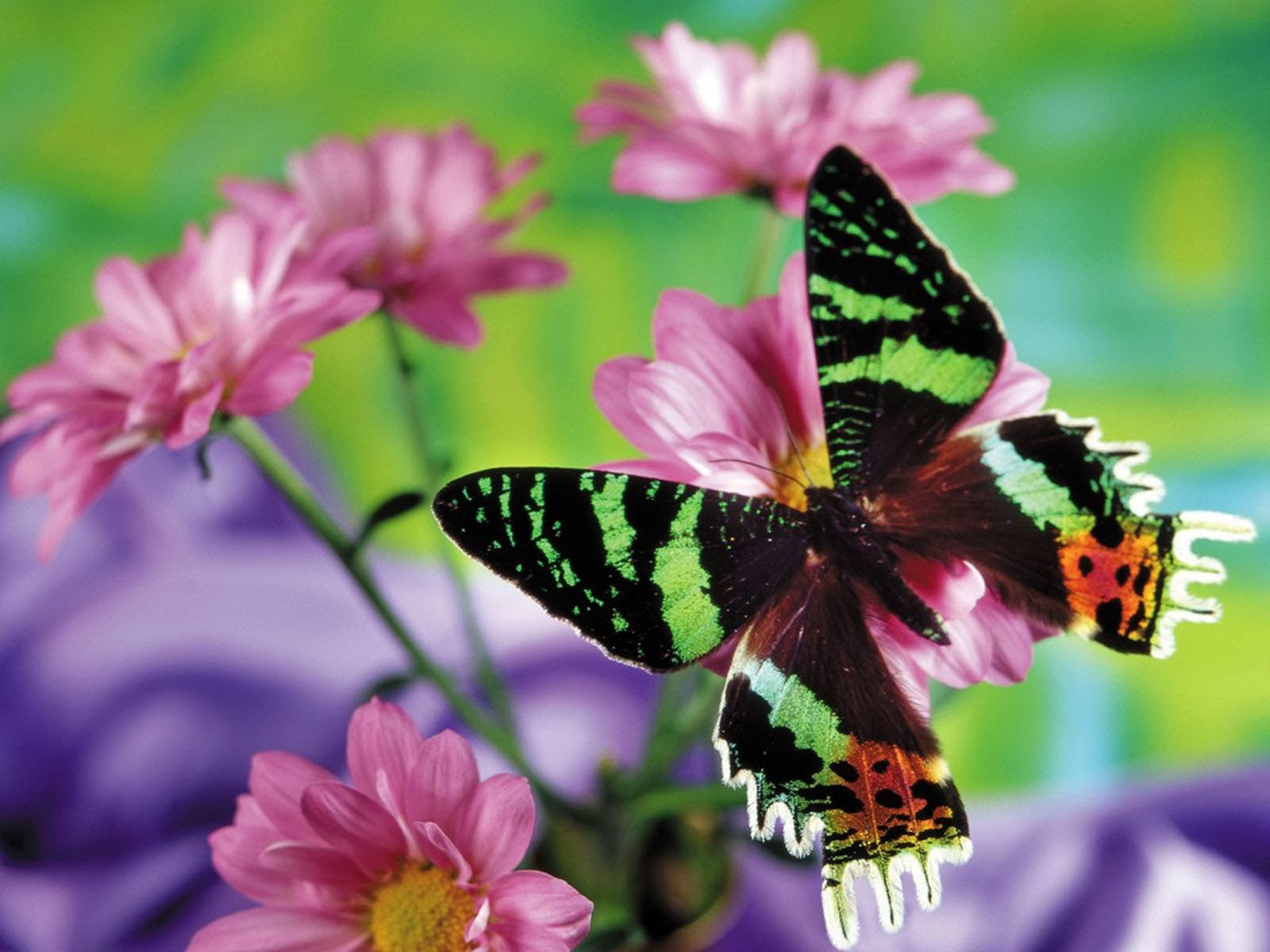 Wallpapers butterfly desktop backgrounds for Butterfly wallpaper for walls