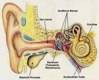 Beberapa Gejala Radang Telinga dan Pengobatan Tradisional Radang Telinga