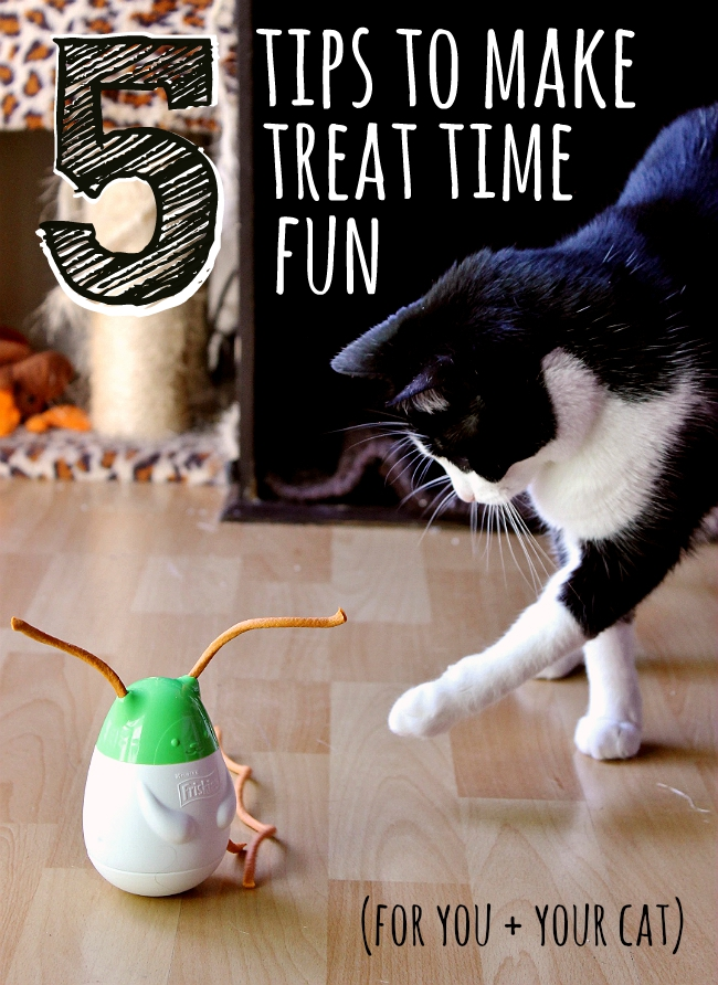 5 Simple Tips to make treating your cat more engaging and fun for both you and your cat!