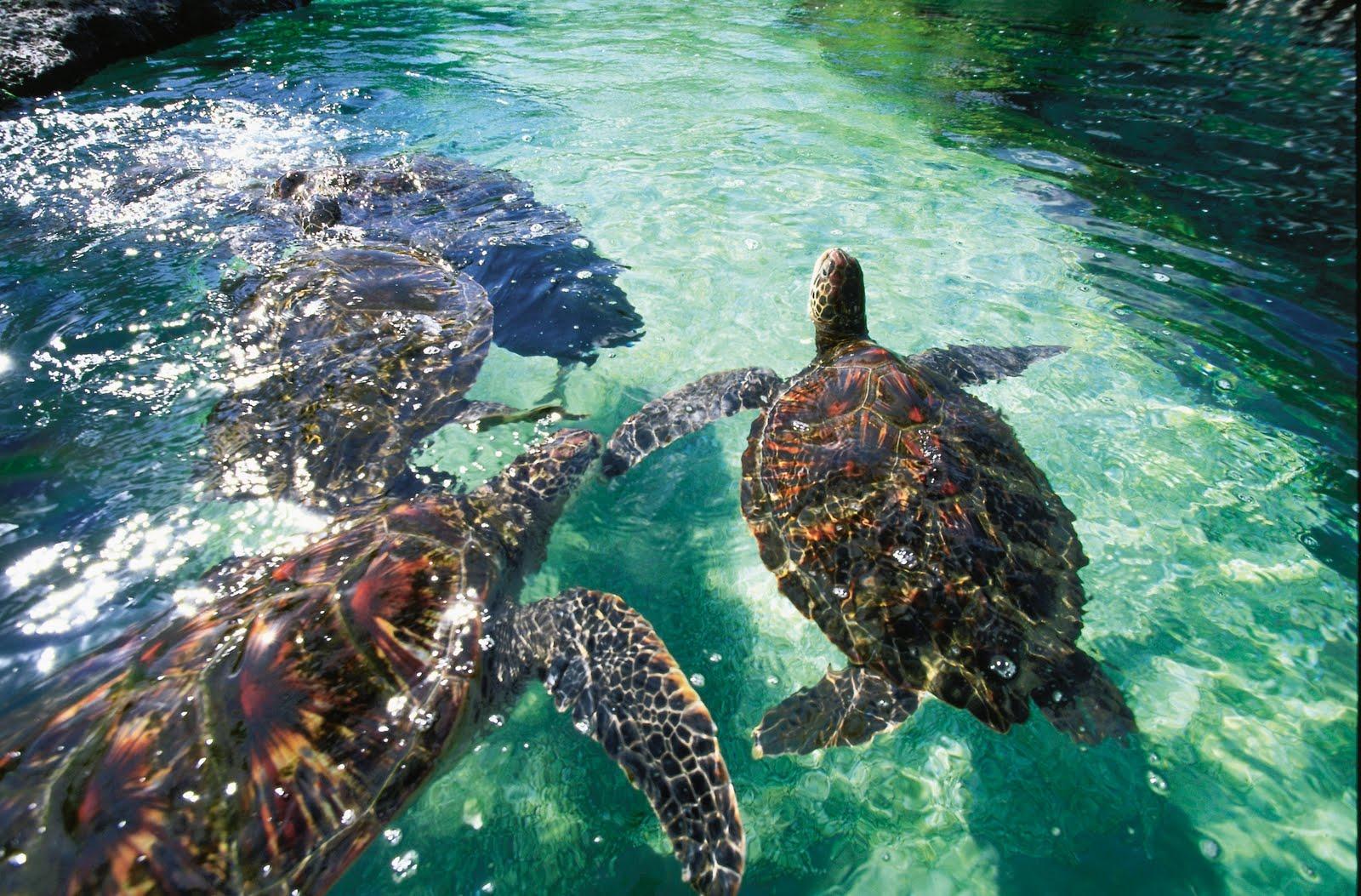 Top world travel destinations molokini crater maui hawaii
