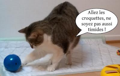 Wallie, chatte de l'école du chat libre de toulouse.