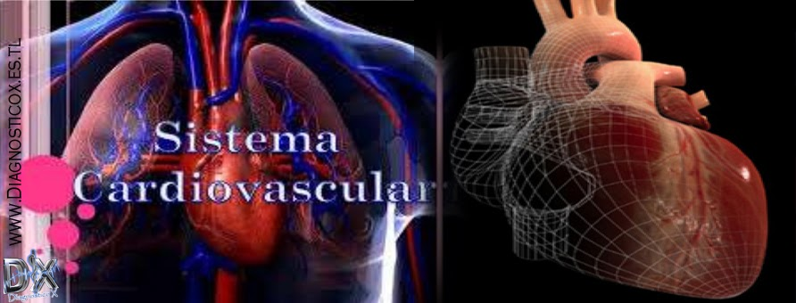 Sistema Cardiovascular [Anatomia]   .