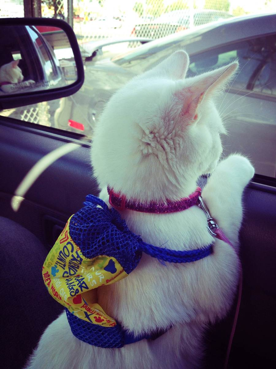 Funny cats - part 66 (35 pics + 10 gifs), cat pics, funny cat pics, funny pictures